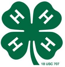 Senior participates in 4-H competition