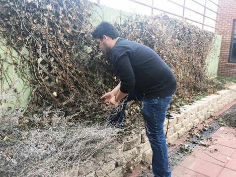 Student Council Community Service Committee remodels outdoor courtyard